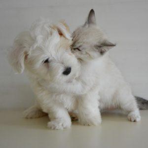 Pets (H.F.J.)